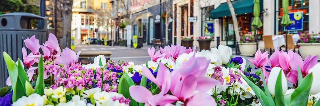 Las Flores Commercial Real Estate
